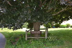 Central Tree Rutland MA